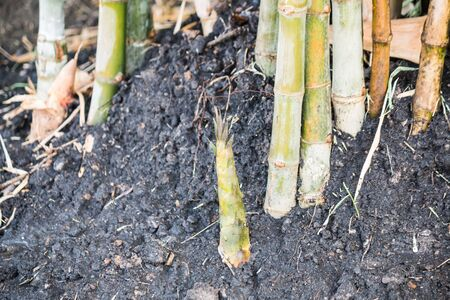 craftwork: The bamboo root Stock Photo