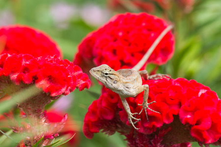 mwanza: Little lizard on flower