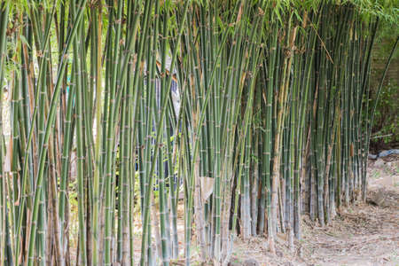 craftwork: The bamboo Stock Photo