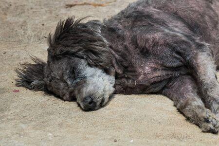 mangy: the mangy dog Stock Photo