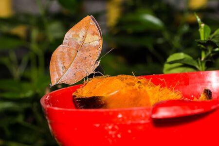lovely: Lovely butterfly