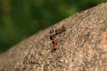 prey: little ant with his prey Stock Photo