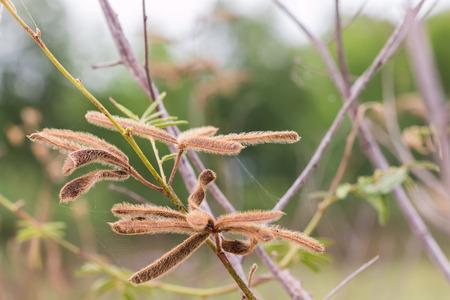 pokrzywka: z nettels w lesie