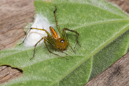 arachnophobia: the little spider on leaf Stock Photo