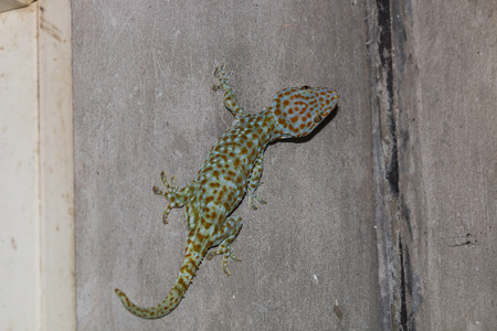 dire: the gecko on the wall