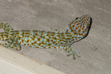 widlife: the gecko on the wall
