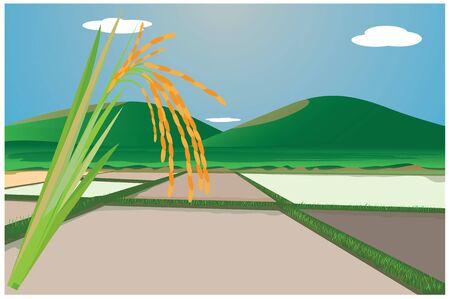 paddy field: paddy field design Stock Photo