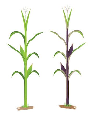 compost: corn plant vector design