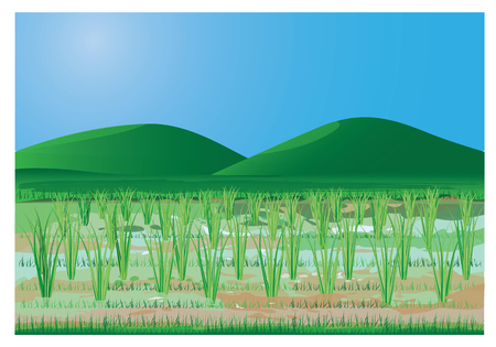 paddy: rice plant at paddy field  vector design