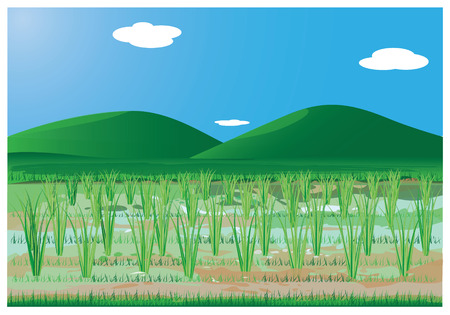 rice paddy: rice plant at paddy field  vector design