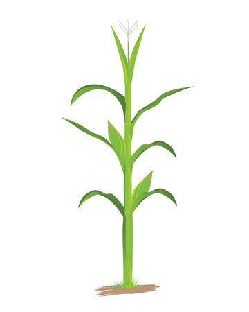 sweetcorn: corn plant vector design