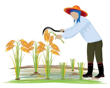 paddy field: agriculturist harvest rice vector design