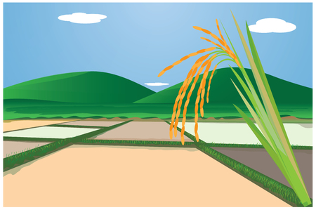 wheat field: rice with paddy field vector design Illustration