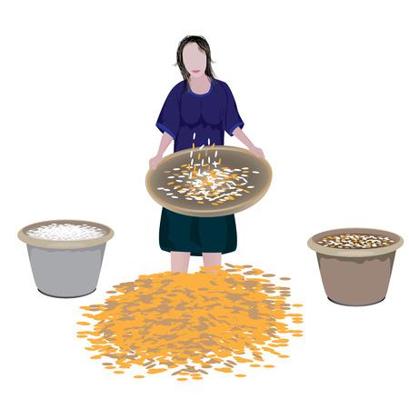threshing: farmer winnow rice vector design Illustration