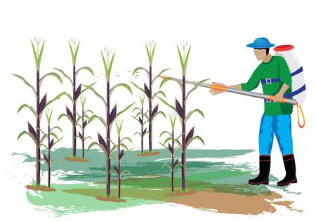 paddy field: agriculturist manure corn plant vector design Illustration