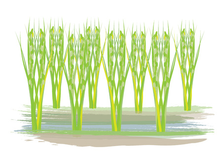 agriculturist: rice plant vector design