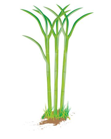 sugarcane: sugarcane plant vector design Illustration