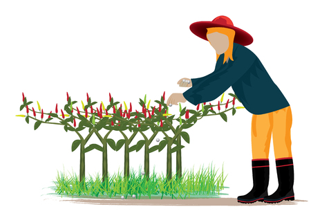 agriculturist: agriculturist harvest chili vector design Illustration
