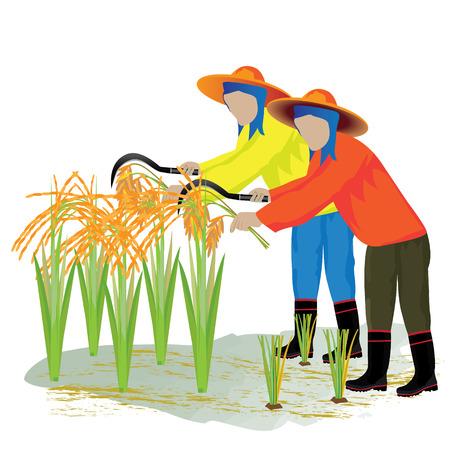 thresh: agriculturist harvest rice design Illustration