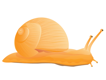 jumbo: snail vector design