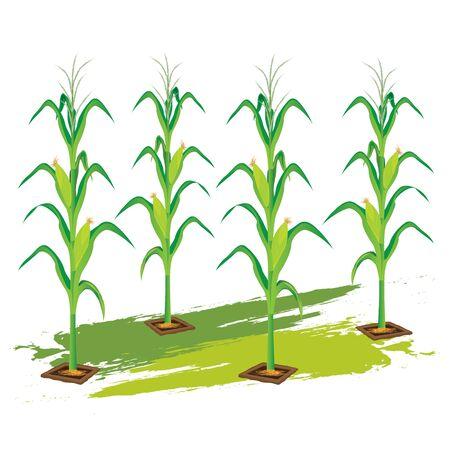diseño de maíz vector de la planta