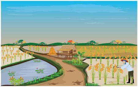 countryman: farmer harvest rice vector design