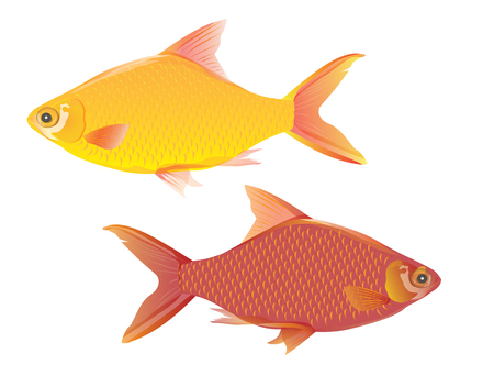 fish vector design Illustration