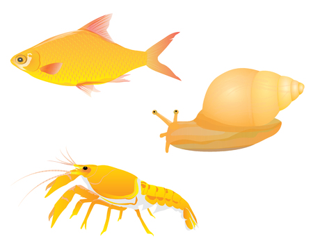 jumbo: fish snail lobster vector design