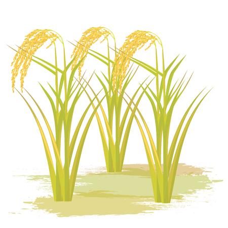 Ryż wzór wektor roślin Ilustracje wektorowe