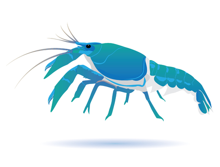 lobster vector design