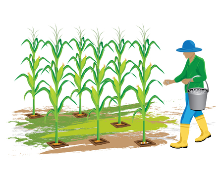 agriculturist manure corn plant vector design Illustration