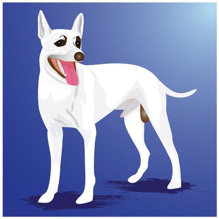 white dog vector design