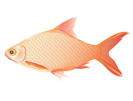 fish vector design Illustration
