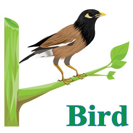 little bird on branch vector design