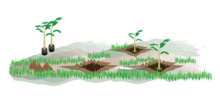 plow: banana plant vector design