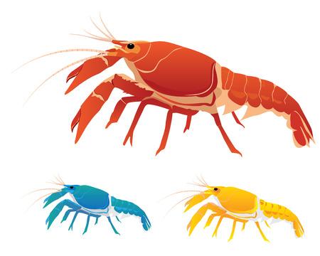 lobster shrimp vector design Illustration
