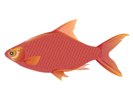 jumbo: red fish vector design
