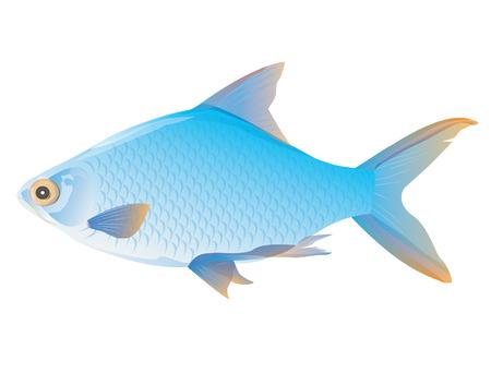blue fish vector design
