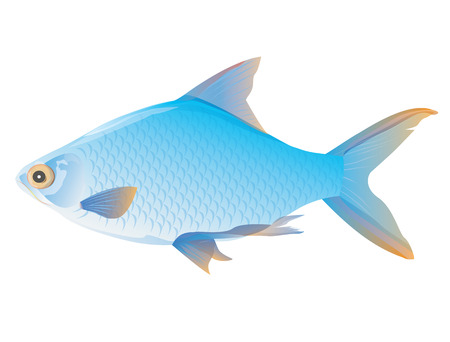 blue fish vector design