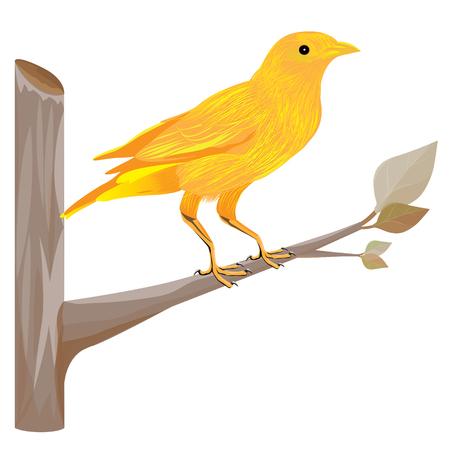 little bird: little bird on branch vector design