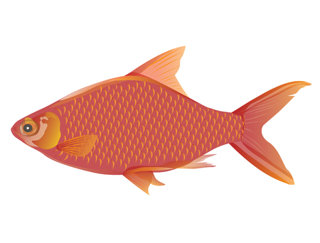 red fish vector design