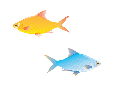 fish vector design, Illustration