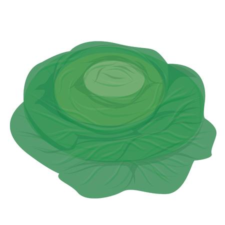 vegetable vector design
