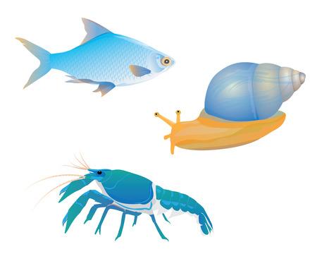 fish snail lobster vector design