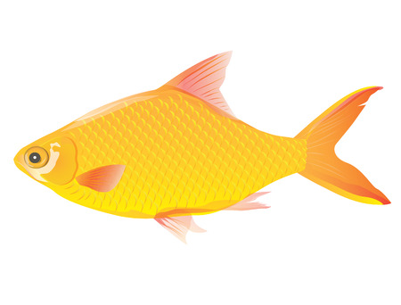 golden fish vector design