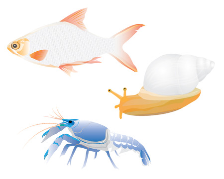 fish lobster snail vector design