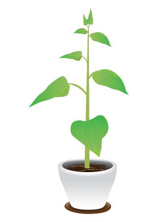 plant pot: green plant in pot vector design