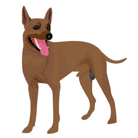 dog vector design Illustration