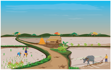 paddy field: lifestyle of people in countryside vector design