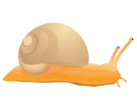snail vector design